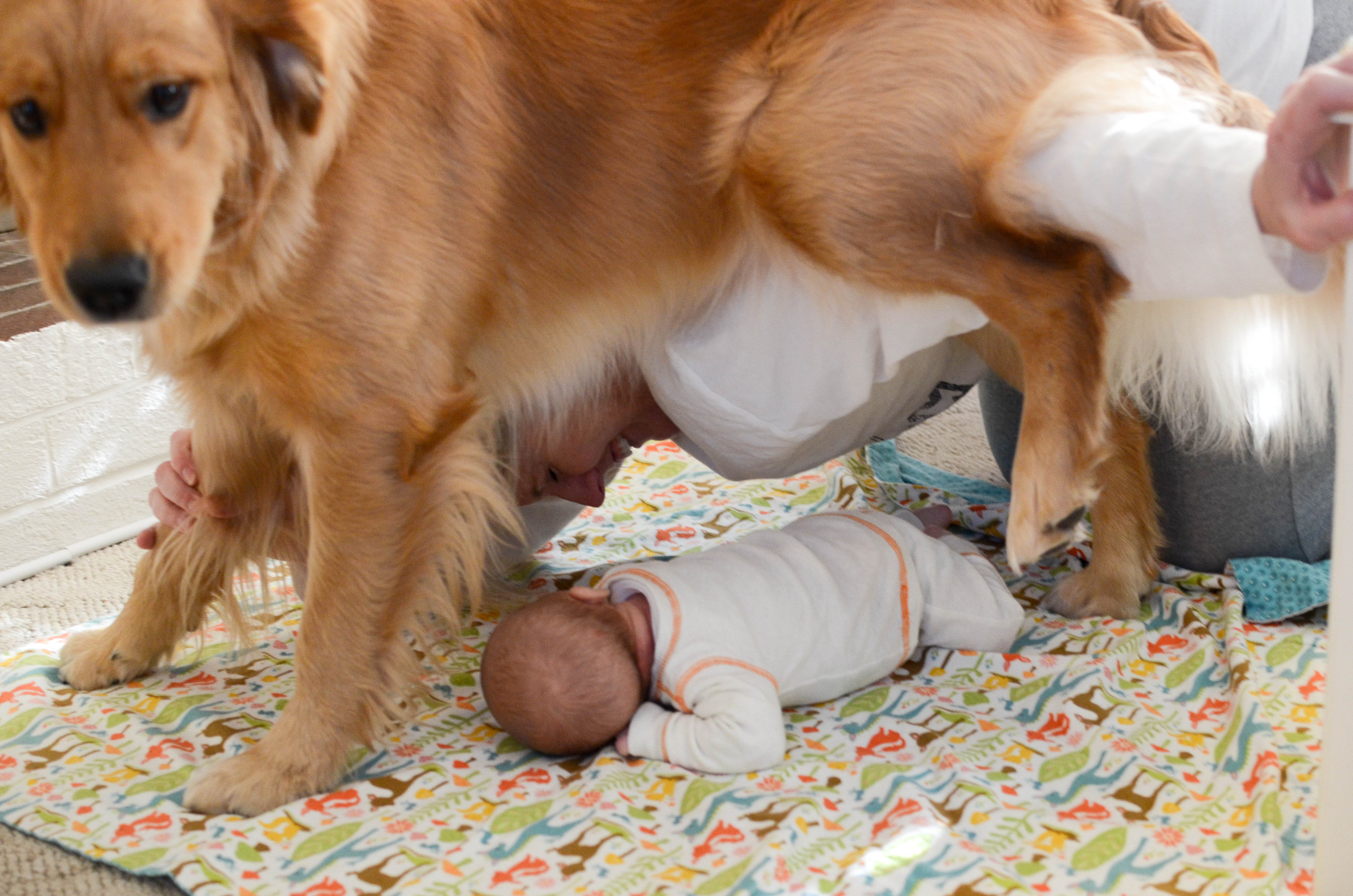 images of baby dogs - photo #41