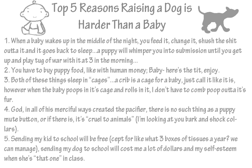 top 10 reasons dog
